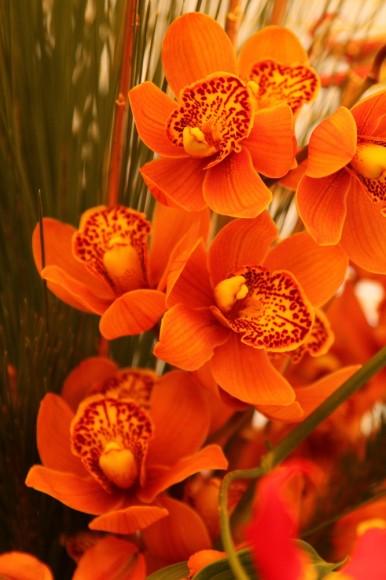 パンダスタジオのエントランスの装花(2011年1月4日)写真4