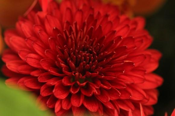 パンダスタジオのエントランスの装花(2011年1月4日)写真5
