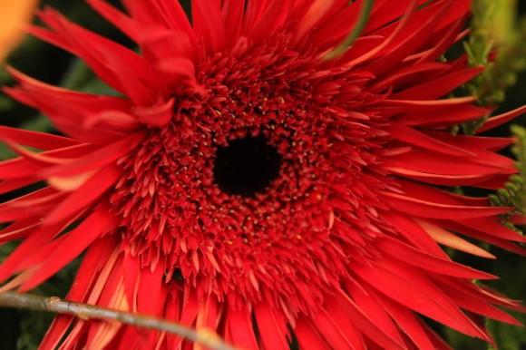 パンダスタジオのエントランスの装花(2011年1月4日)写真6