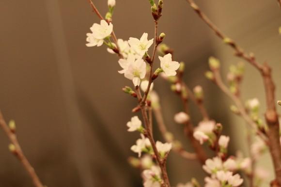 小山大蔵の装花作品_桃の花