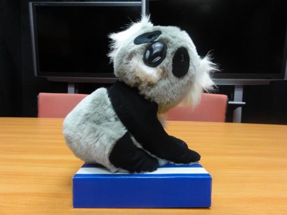 ▲マッカイさんからのおみやげの「コアラのようなパンダ」又は「パンダのようなコアラ」