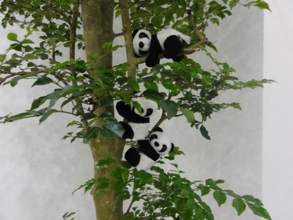 ▲木に生息するパンダたち