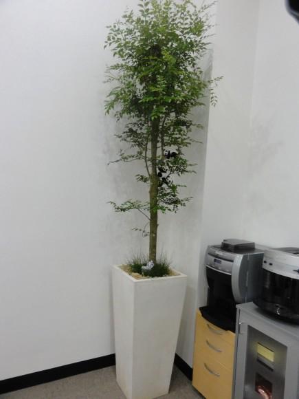 ▲ええ、観賞用の植木です