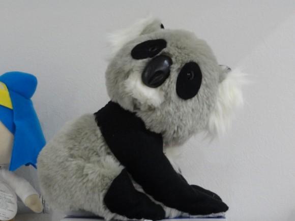 マッカイ清美さんがオーストラリアで購入してきてくれたパンダ、、、?