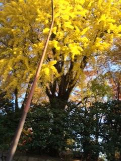 京都御苑 2014年11月24日現在の紅葉