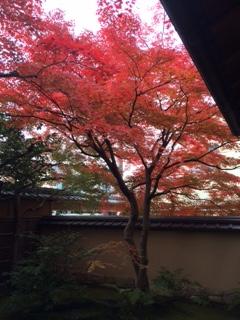 京都下鴨 宝泉堂  お庭 紅葉