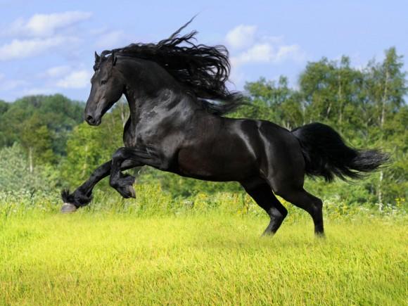 2014年 馬