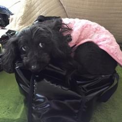 犬がヘルニアに!犬の健康にご興味がある方も動物看護講座を。