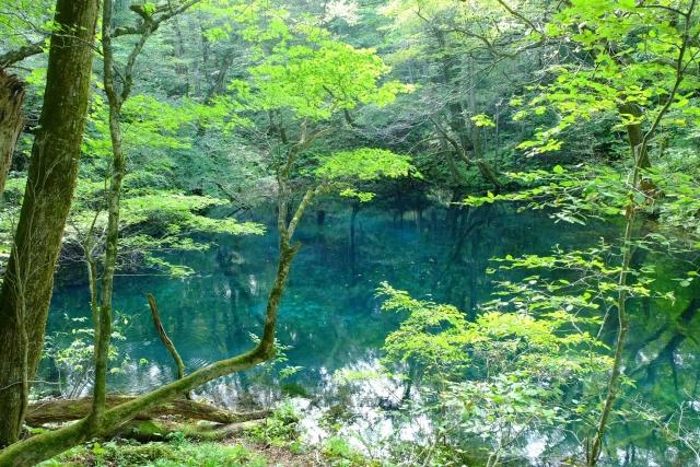 国内観光の知識をつけるなら「ドナルド松山の国内旅行業務取扱管理者」講座 白神山地(イメージ)